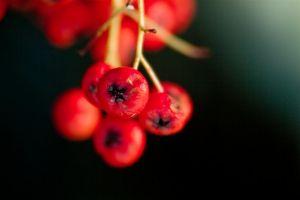 2012-02-07--14-43-40_EOS7D__0391.JPG